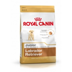 Labrador junior Royal Canin