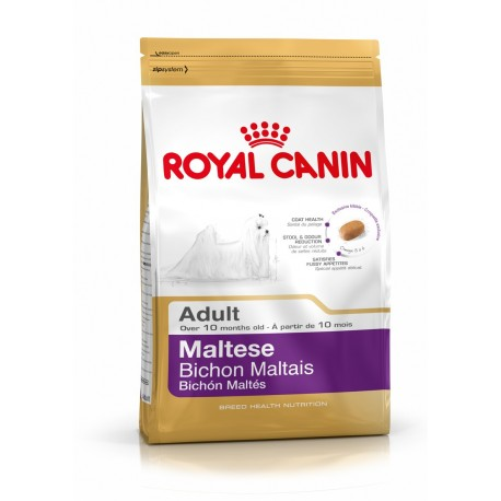 Maltese Royal Canin