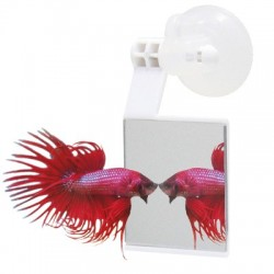Betta Strike espejo para Bettas