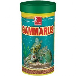 Gammarus tortugas