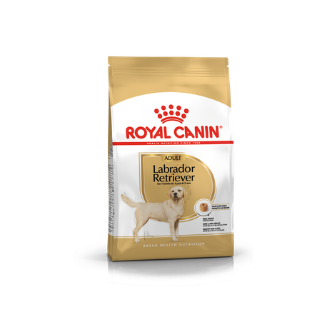 Labrador Retriever Royal Canin