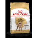 Poodle Royal Canin