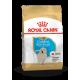 Golden Retriever Junior Royal Canin