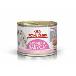 Babycat Instinctive