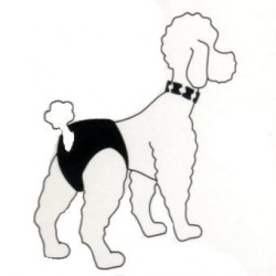 Braguita perras en celo