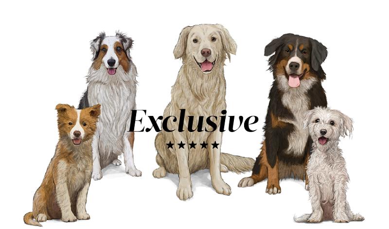 Todo el catálogo Gosbi para perros en nuestra tienda física