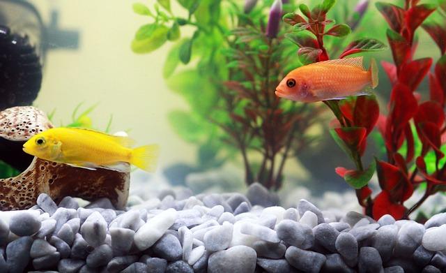 La armonía de un acuario