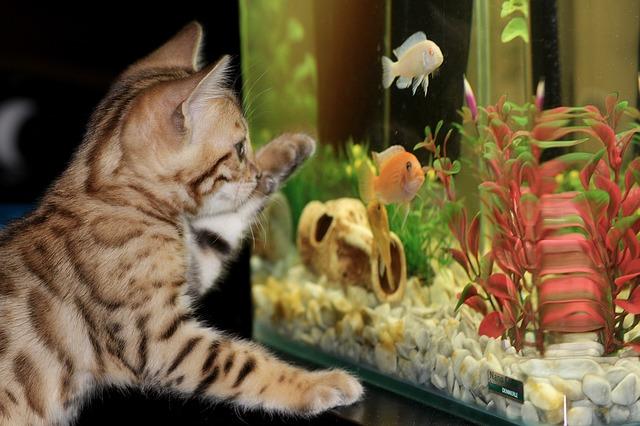 La maravillosa sensación al observar un acuario