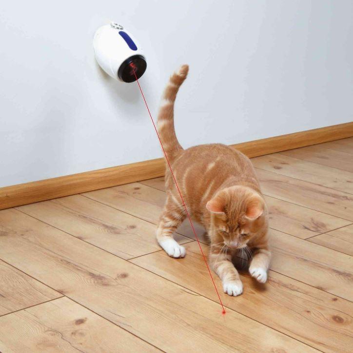 Gato jugando con el láser móvil