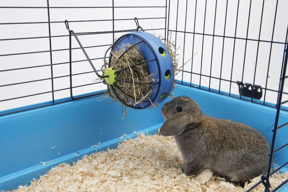 Portaheno y chucherías Bunny Toy