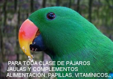 Complementos y alimentos para pájaros